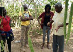 Photo de formation en Agro-écologie et Agriculture biologique