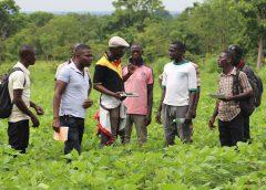 Photo sur l'appui à la production agricole